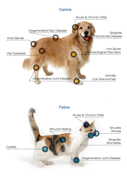 Laser-Canine-Diagram