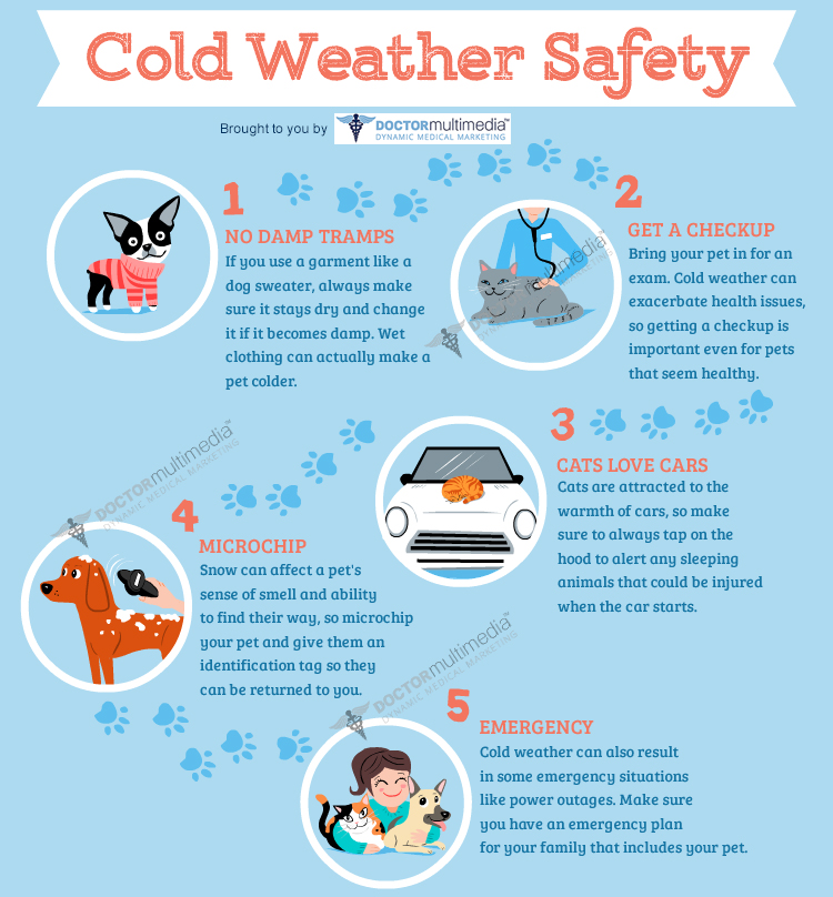 10 Cold Weather Pet Safety Tips